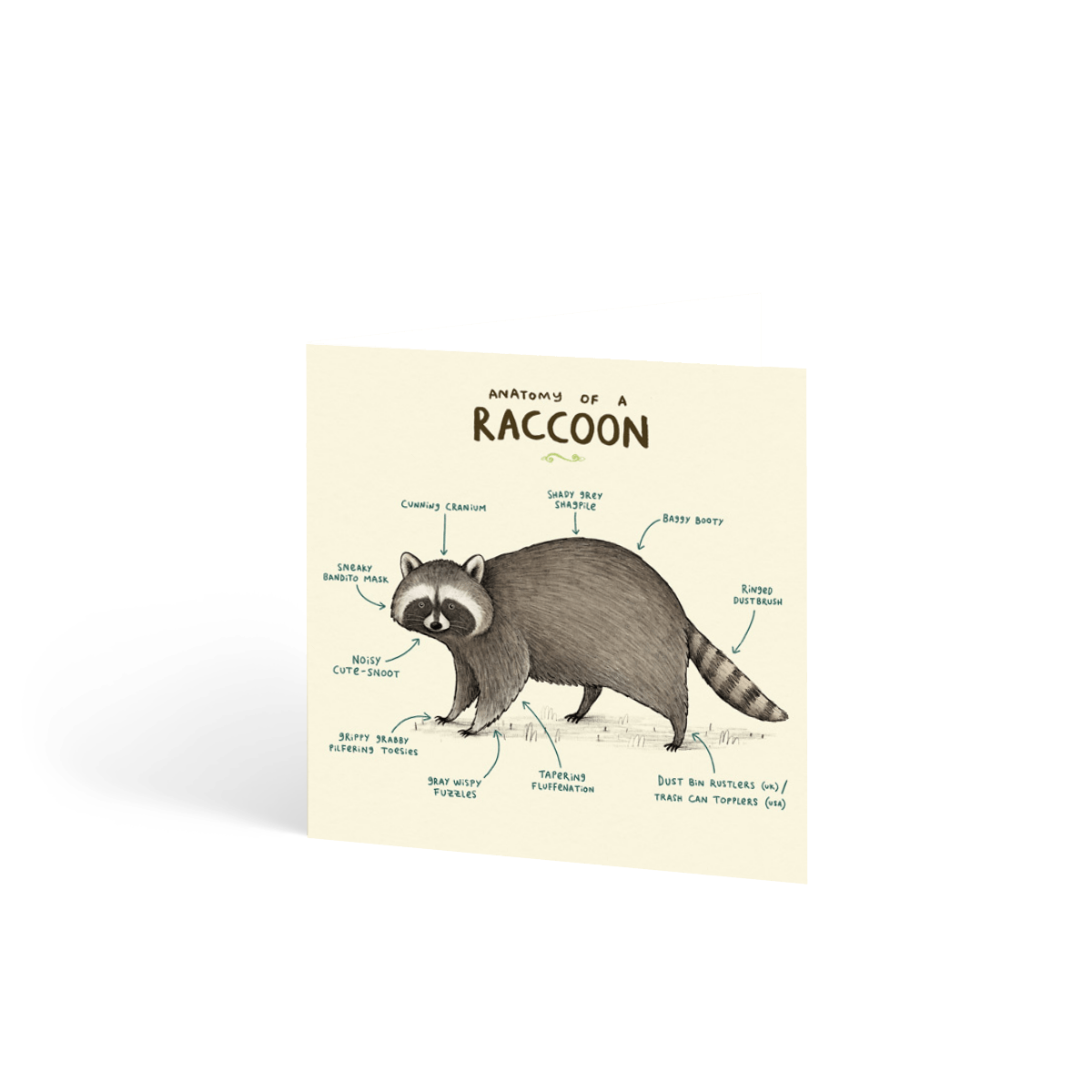 Https%3a%2f%2fwww.papier.com%2fproduct image%2f79705%2f16%2fanatomy of a raccoon 18824 front 1560782325.png?ixlib=rb 1.1